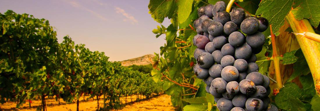 Vignes d'Ardèche